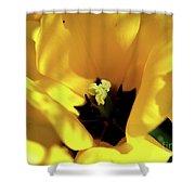Tulip Close Up Shower Curtain