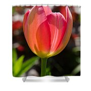Tulip On The Green Background Shower Curtain