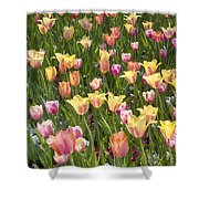 Tulips At Dallas Arboretum V92 Shower Curtain