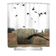 Turkey Vulture Takes Flight Shower Curtain
