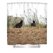 Turkey Vultures Shower Curtain