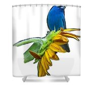 Tweet Tweet Shower Curtain