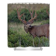 Two In The Bush Shower Curtain by Jim Garrison