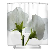 Two White Sweet Peas 2 Shower Curtain
