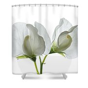 Two White Sweet Peas Shower Curtain