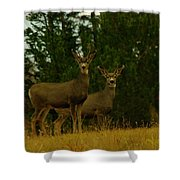 Two Young Bucks Shower Curtain