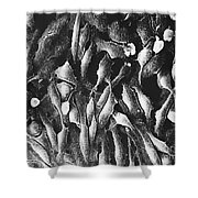Typical Animal Cells, Sem Shower Curtain