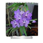 Vanda Orchid Shower Curtain