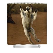 Verreauxs Sifaka Hopping Berenty Shower Curtain