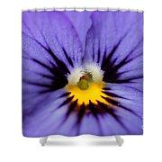 Viola Named Sorbet Blue Heaven Jump-up Shower Curtain
