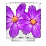 Violet Asters Shower Curtain