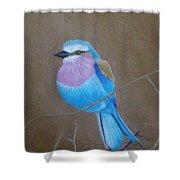 Violet-breasted Roller Bird Shower Curtain