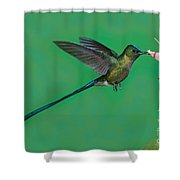 Violet-tailed Sylph Shower Curtain