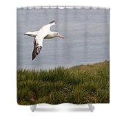 Wandering Albatross Shower Curtain