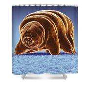 Water Bear Tardigrades Shower Curtain