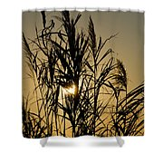Whalehead Sunset Obx #3 Shower Curtain
