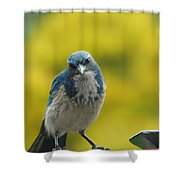 What Did You Say Shower Curtain
