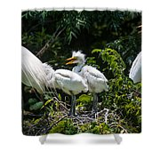 Whats For Lunch Shower Curtain