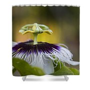 Whispers Of The Heart Shower Curtain