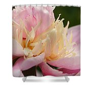 White And Pink Peony Shower Curtain