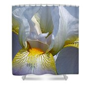 White And Yellow Iris 2 Shower Curtain