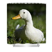 White Duck Shower Curtain