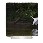 White Egret In Flight Shower Curtain