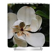 White Magnolia  Shower Curtain