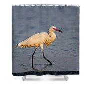 White Morph Redish Egret Shower Curtain