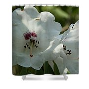 White Rhododendron Blossom Shower Curtain