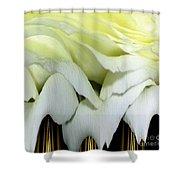 White Rose Polar Coordinates Shower Curtain