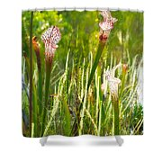 White-topped Pitcher Plant Shower Curtain