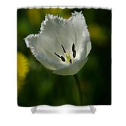 White Tulip On The Green Background Shower Curtain
