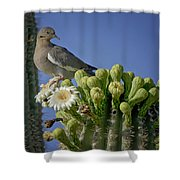 White-winged Dove Atop A Saguaro Shower Curtain