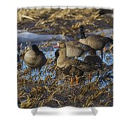 Whitefront Goose Shower Curtain