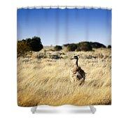 Wild Emu Shower Curtain by Tim Hester
