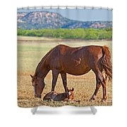 Wild Horses Mother And Foal Shower Curtain