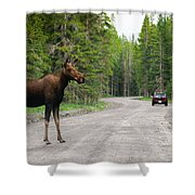 Wild Moose Shower Curtain