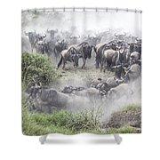 Wildebeest Migration 1 Shower Curtain