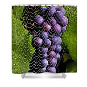 Wine In A Web Shower Curtain