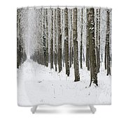 Winter Alley Shower Curtain