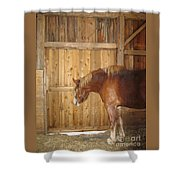 Wistful Shower Curtain