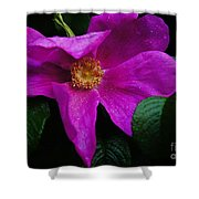 Withered Rose Shower Curtain