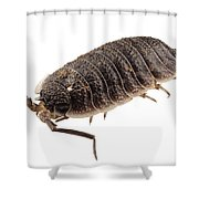 Woodlouse Species Porcellio Wagnerii Shower Curtain
