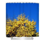 Yellow Autumn Tree Shower Curtain