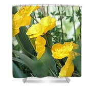 Yellow Iceland Poppy Shower Curtain