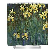 Yellow Irises  Shower Curtain