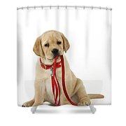 Yellow Labrador Puppy Shower Curtain