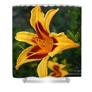 Yellow Tiger Lily Shower Curtain