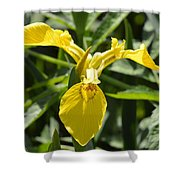 Yellow Water Iris Shower Curtain